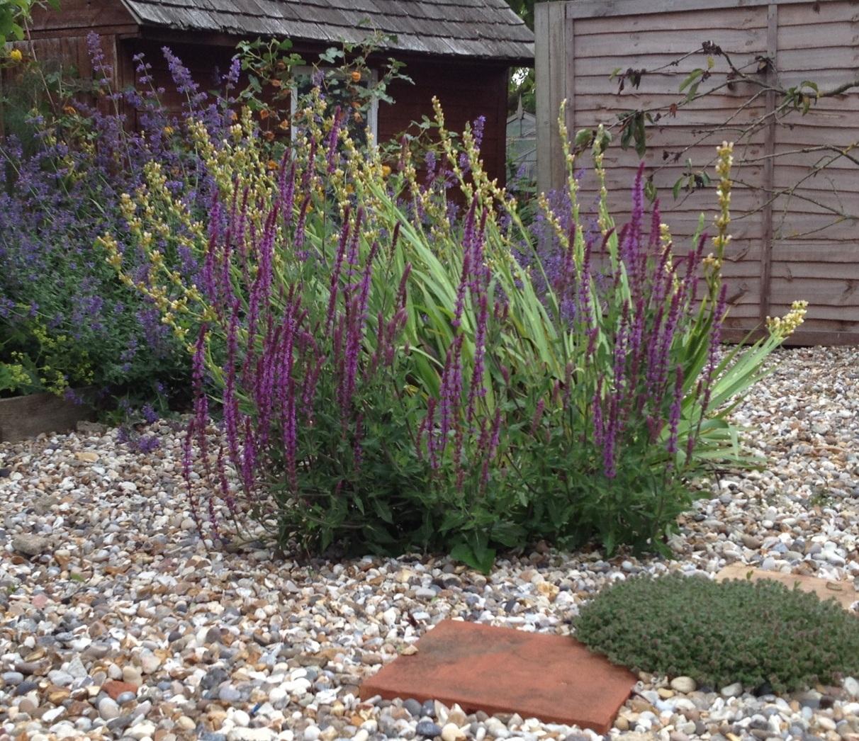 Suffolk gravel garden garden designer based in brighton for Garden designs with gravel